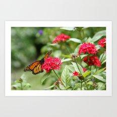 Papillon III Art Print