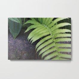 Ferns of Strength in Hawaii Metal Print