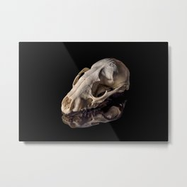 Raccoon Skull Reflection Metal Print