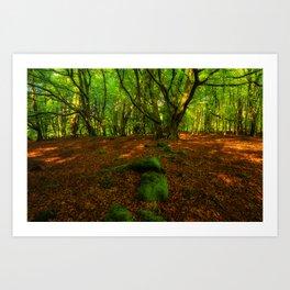 Wander 66 Art Print