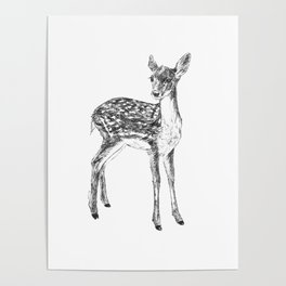 Ink drawing of a fawn Poster