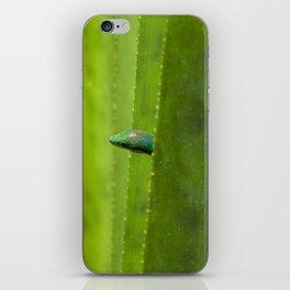 Peekaboo! A gecko in the agave iPhone Skin