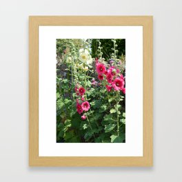Hollyhocks Framed Art Print