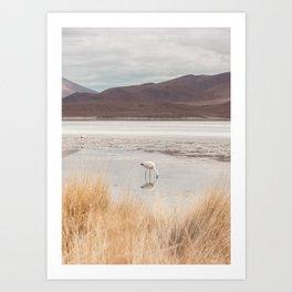 Flamingo In The Wild - South America Landscape Art Print