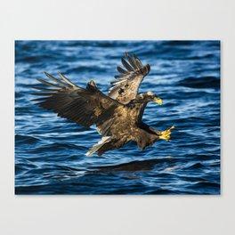 Sea Eagle Dives Canvas Print