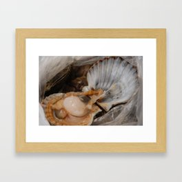 Raw scallop in the shell, opened Framed Art Print