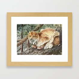 Fuertes, Louis Agassiz (1874-1927) - Burgess Animal 1920 (Lynx) Framed Art Print