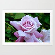 Blushing Bloom Art Print