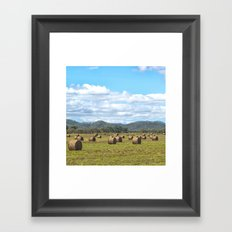 Hay bales on a sunny day Framed Art Print