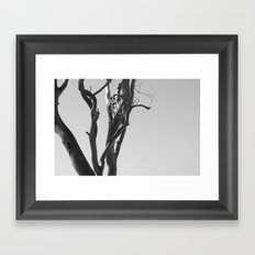 Now You See The Tree Framed Art Print