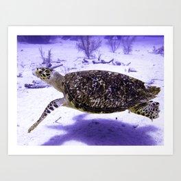 Swimming Hawksbill Turtle Art Print