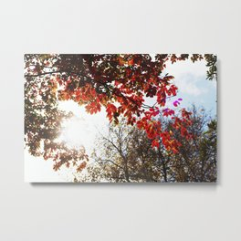 Autumn in the Air Metal Print