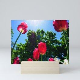 Skyward Tulips Mini Art Print