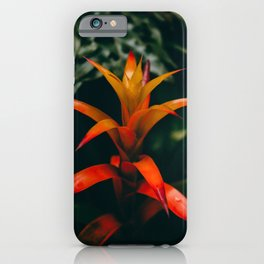 Tropical Bromeliad iPhone Case