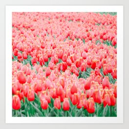 Tulips field 15 Art Print