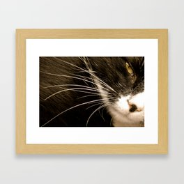 whiskers Framed Art Print