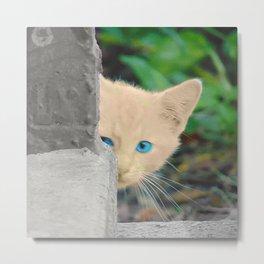 Curious Kitten with Aqua Eyes Metal Print