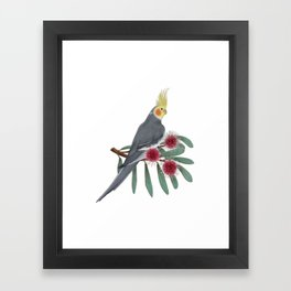Normal Grey Cockatiel Framed Art Print