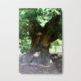 Sweet Chestnut Tree in Greenwich Park, London Metal Print