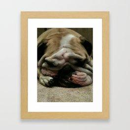 Bulldog Sleeping Framed Art Print