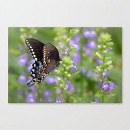 Swallowtail Sunshine Canvas Print