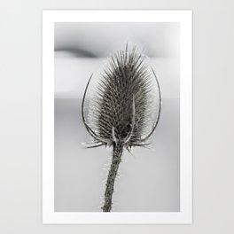 Dry flower Art Print
