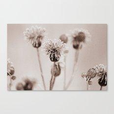 Cirsium 4009 Canvas Print