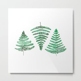 Fiordland Forest Ferns Metal Print