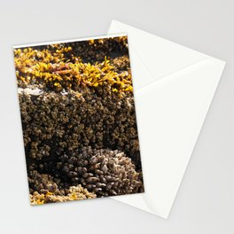 Barnacles on the Beach Stationery Cards