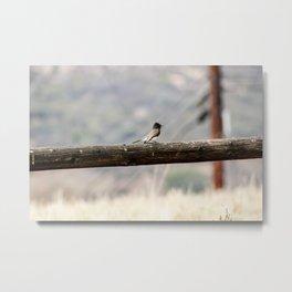 Song Bird Metal Print
