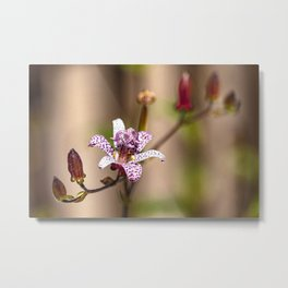Japanese Toad Lily Metal Print