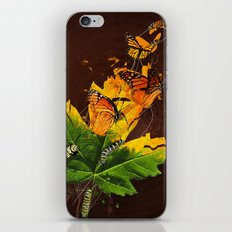 Monarchs iPhone & iPod Skin