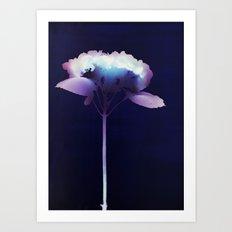 Photogram - Hydrangea II Art Print