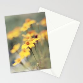 Orange zest Stationery Cards