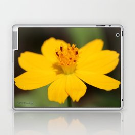 Cosmos Sulphureus named Ladybird Dwarf Lemon Laptop & iPad Skin