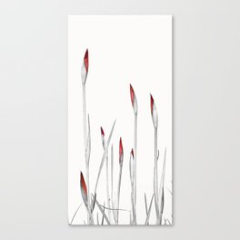 Red and White Spring Canvas Print