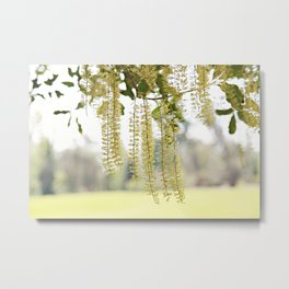 Lacy Curtain Metal Print