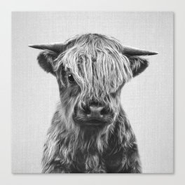 Highland Calf - Black & White Canvas Print