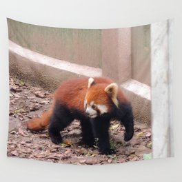 Chongqing Red Panda   Panda roux Wall Tapestry