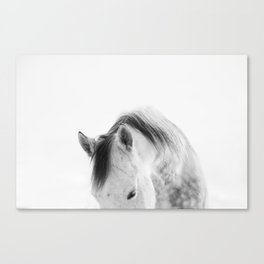 Modern Photography White Horse Canvas Print