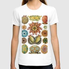 Ernst Haeckel Ascidiae Sea Squirts T-shirt