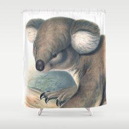 Koala bear in the forest of Australia Shower Curtain
