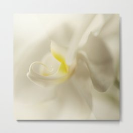 Silky Touch - beautiful orchid flower Metal Print