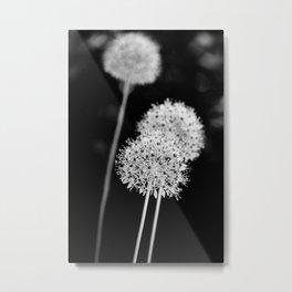Allium cristophii Metal Print