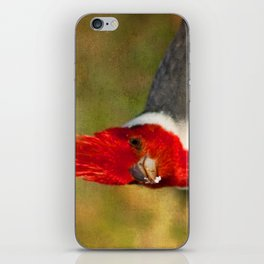 Red-crested Cardinal iPhone Skin