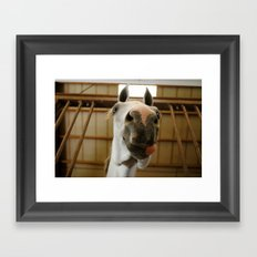 Smiling Horse Framed Art Print