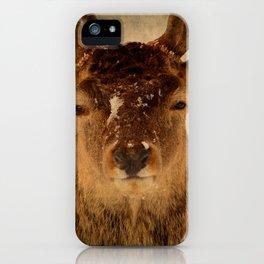 Deer In Headlights iPhone Case