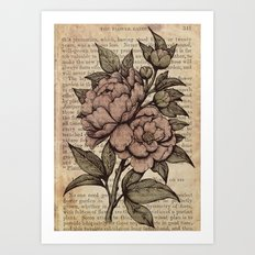 Peonies  - Color Art Print