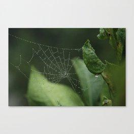 Spiderweb in the rain Canvas Print