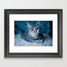 lover cat Framed Art Print
